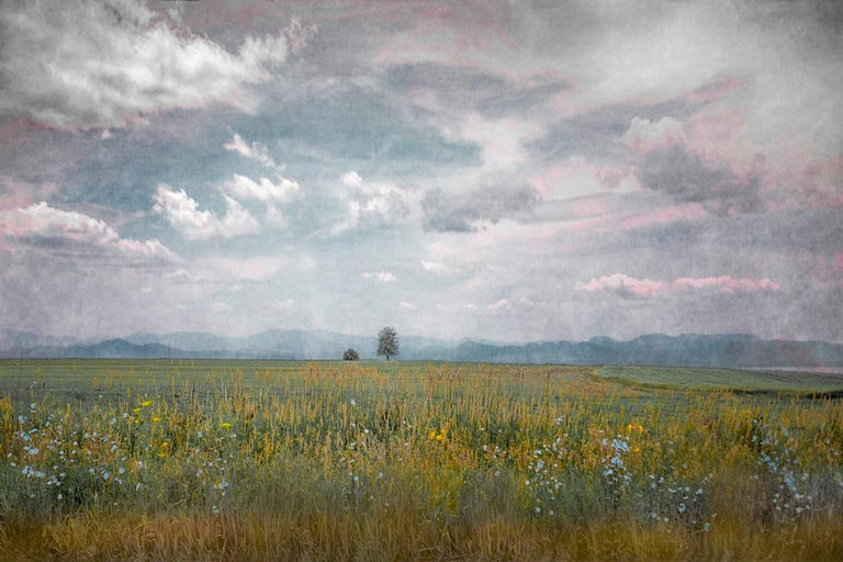Contemporary sepia toned landscape photograph of trees, sky and clouds  Archival pigment print 24 x 36 inches unframed, made to order Also available as 12 x 18 inch print, $800  This modern landscape photograph was taken by Hudson Valley