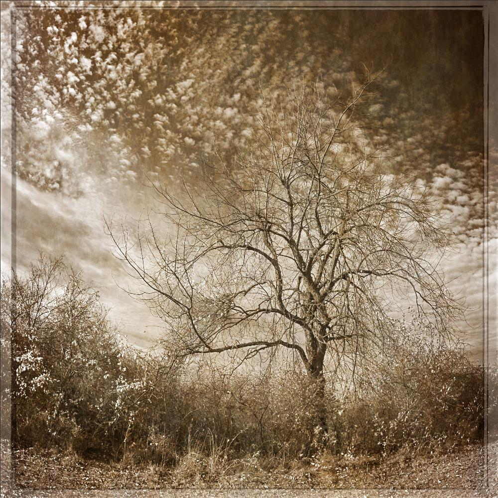 Cloud Blossoms (Sepia Toned Landscape Photograph of Trees & Sky)
