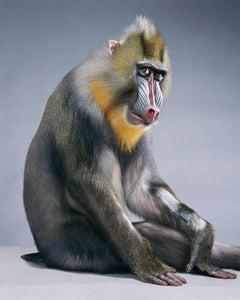 Monkeysuit