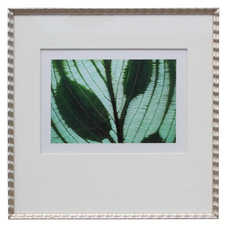 Botanical Photograph By Jim Laser - Gray Figurative Photograph by Jim Laser
