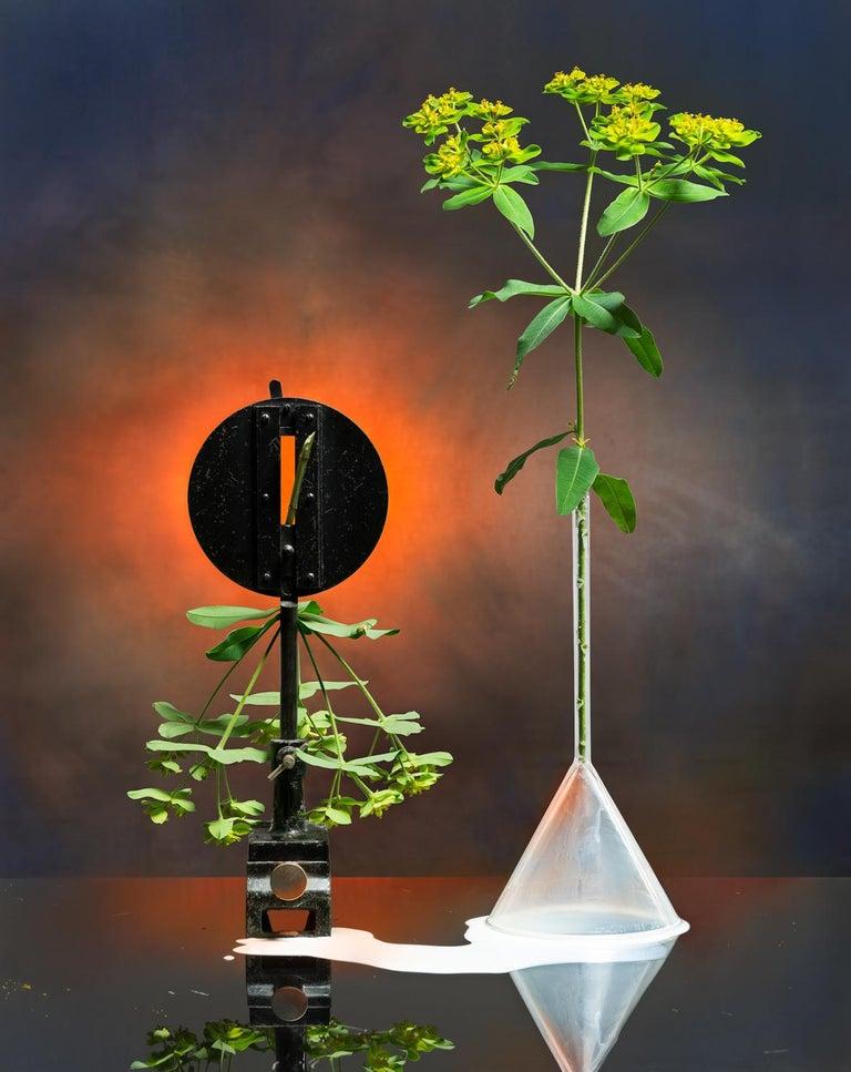 Jo Whaley Color Photograph - Euphorbia