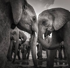 At the waterhole, Kenya, Elephant, b&w Photography, animal, contemporary