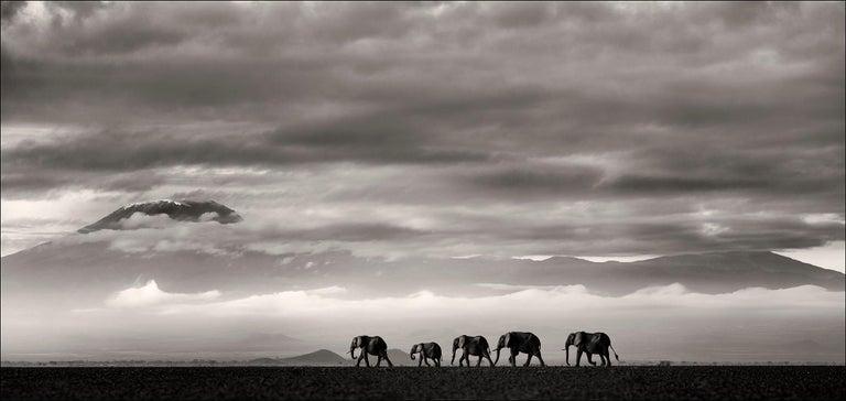 Beyond II, Kenya, Elephant, wildlife, b&w photography - Photograph by Joachim Schmeisser