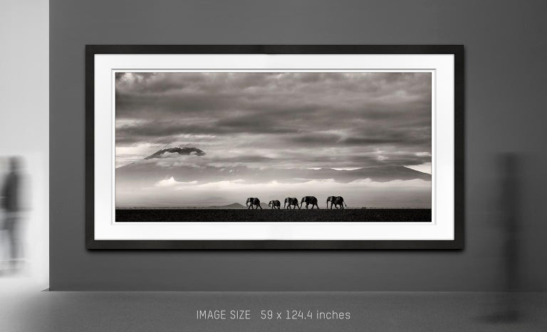 Beyond II, Kenya, Elephant, wildlife, b&w photography - Gray Landscape Photograph by Joachim Schmeisser