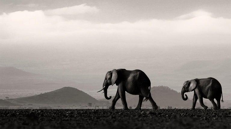 Beyond II, Kenya, Elephant, wildlife, b&w photography For Sale 2