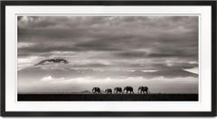 Beyond II, Kenya, Elephant, wildlife, b&w photography