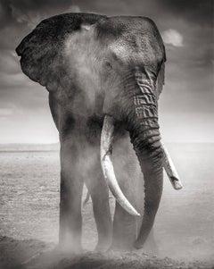 Big Bull dusting, Kenya, 21st century, contemporary, wildlife, Fine Art Print