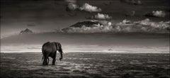 Big bull walking, Elephant, black and white photography, wildlife