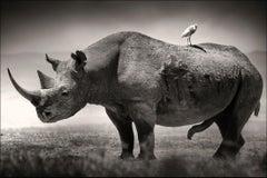 Big male Black Rhino, Kenya 2019, Rhino, wildlife, b&w photography
