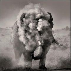 Bull dusting I, Kenya, Elephant, b&w photography, Africa, Portrait