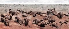 Circle of Life I, Kenya, Elephant, wildlife