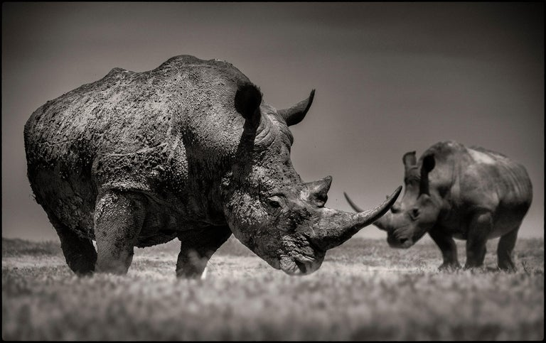 Limited Edition of 10 More sizes on request  These two white rhinos crossing their horns in Northern Kenya. Impressive portrait of the last rhinos on earth.  For years, Joachim Schmeisser has been photographing the last giants of Africa at close