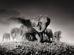 Earth I, Kenya, 21st century, contemporary, wildlife, Fine Art Print
