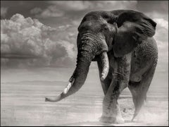 Elephant bull coming out of the marsh, Kenya, Wildlife, b+w photography