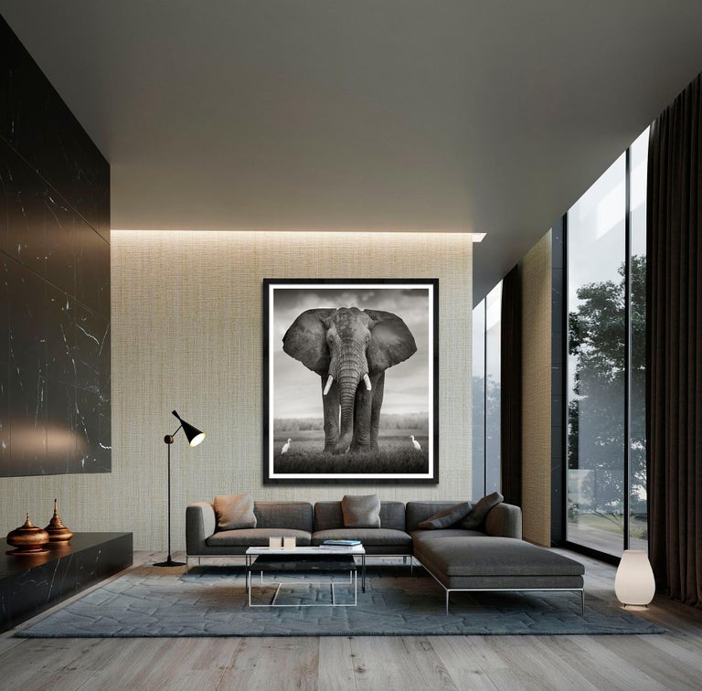 Elephant Bull with two birds Kenya,  21st century, contemporary, wildlife For Sale 2