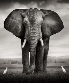 Elephant Bull with two birds Kenya,  21st century, contemporary, wildlife