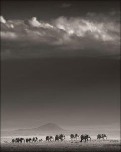 Elephant Family in front of Kilimanjaro, Kenya, b&w photography, wildlife