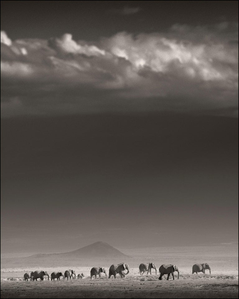Joachim Schmeisser Landscape Photograph - Elephant Family in front of Kilimanjaro, Kenya, b&w photography, wildlife