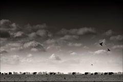 Elephant herd walking to the waterhole, Africa, Wildlife