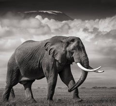 Elephant in front of Killimanjaro