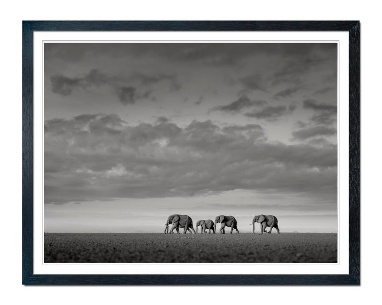 Elephants crossing, Kenya, b&w, wildlife, Fine Art Print - Photograph by Joachim Schmeisser