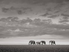Elephants crossing, Kenya, b&w, wildlife, Fine Art Print