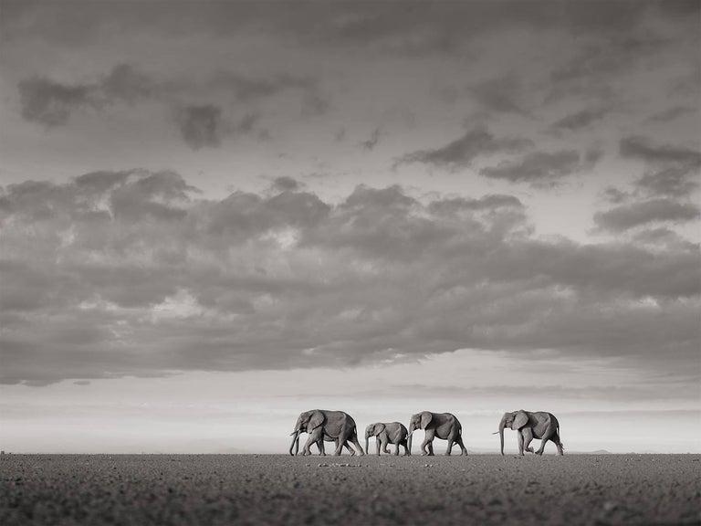 Joachim Schmeisser Landscape Photograph - Elephants crossing, Kenya, b&w, wildlife, Fine Art Print