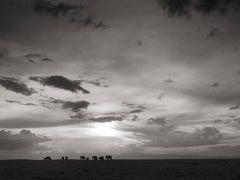 Elephants in the sunset, Kenya