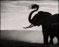 Eternity #2, Kenya 2019, Elephant, wildlife, Platinum
