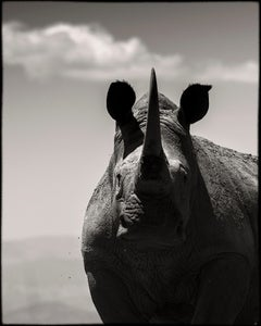 Eternity #9, Kenya 2019, Rhino, wildlife,  Platinum