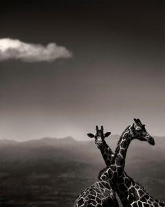 Giraffe Couple, Kenya 2019, contemporary, wildlife, b&w photography