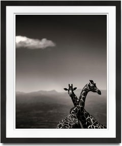 Giraffe Couple, Kenya, contemporary, wildlife, b&w photography