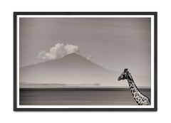 Giraffe in front of Kilimanjaro, Kenya 2019, Giraffe, wildlife, b&w photography