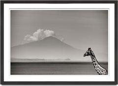 Giraffe in front of MtKenya, Kenya 2019, Giraffe, wildlife, b&w photography