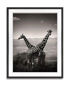 Giraffes crossing, wildlife, b&w photography, landscape, Africa