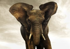 Golden Giant III, Kenya, 21st century, contemporary, wildlife, Fine Art Print