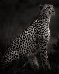 Imani I, Cheetah, blackandhwite photography, Africa, Portrait, Wildlife