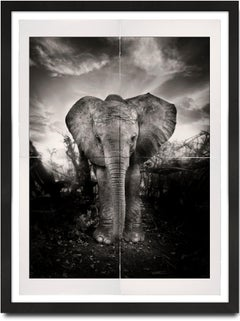 Kibo, Platinum Palladium, Hall of Giants Series