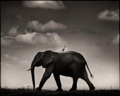 Lone Rider, Kenya, Elephant, wildlife, b&w photography