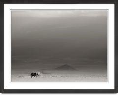 Lonely Bull dusting, Elephant, wildlife, Africa, blackandwhite