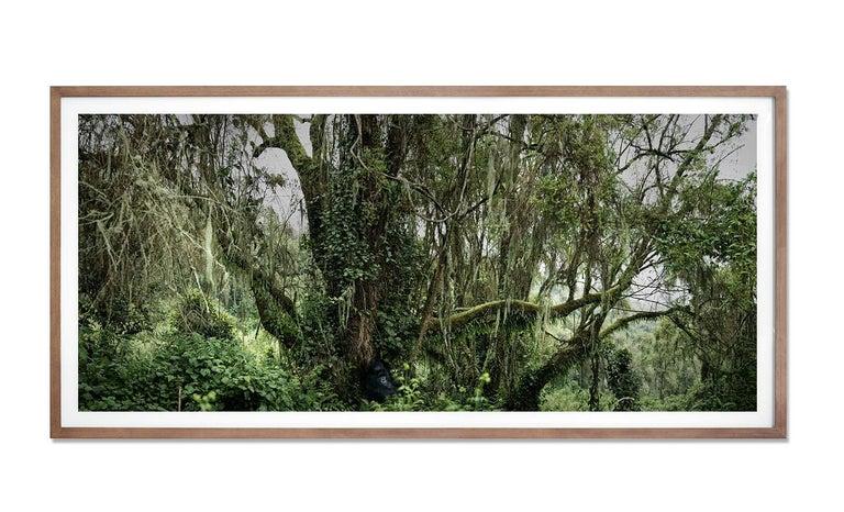 Lost Paradise, Rwanda, Contemporary, Gorilla, Africa - Black Landscape Photograph by Joachim Schmeisser