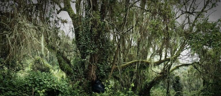 Joachim Schmeisser Landscape Photograph - Lost Paradise, Rwanda, Contemporary, Gorilla, Africa