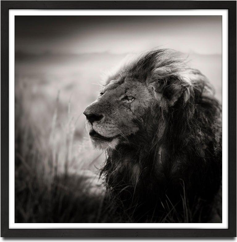 Morani, Kenya, Lion, b&w photography, Africa, Portrait - Photograph by Joachim Schmeisser