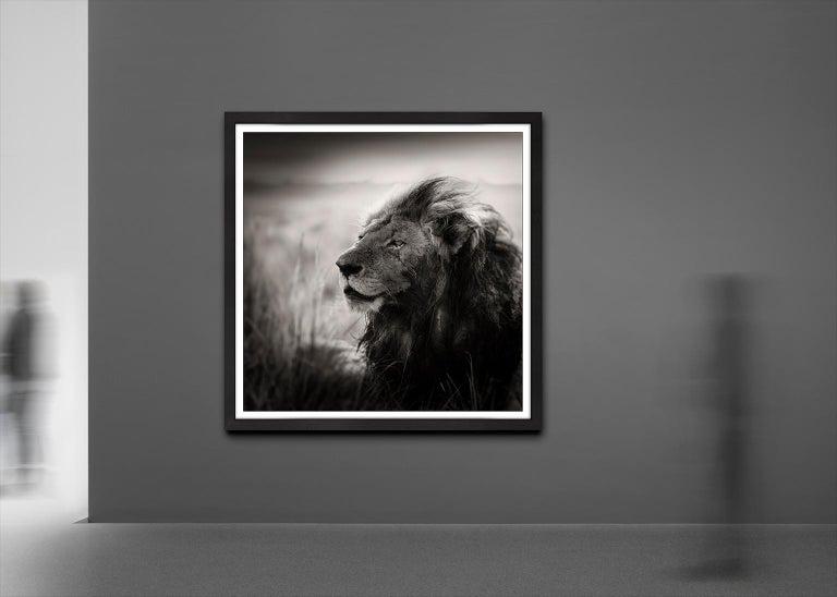 Morani, Kenya, Lion, b&w photography, Africa, Portrait - Contemporary Photograph by Joachim Schmeisser