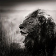Morani, Kenya, Lion, b&w photography, Africa, Portrait