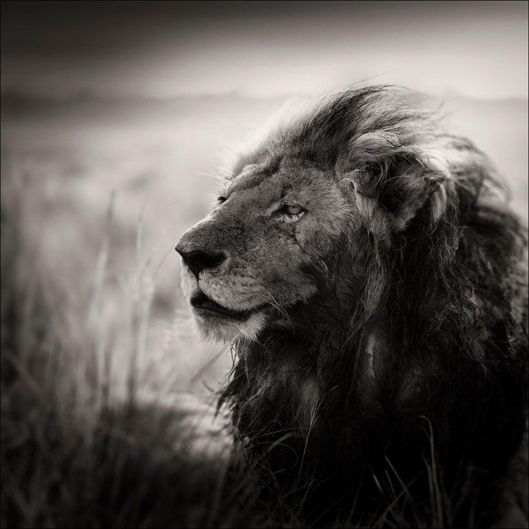 Joachim Schmeisser Black and White Photograph - Morani, Kenya, Lion, b&w photography, Africa, Portrait
