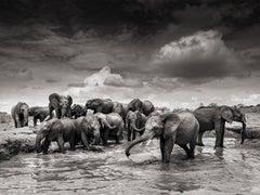 Mudbath IV, Kenya, 21st century, contemporary, wildlife, Fine Art Print