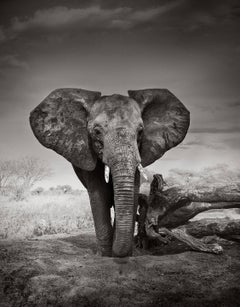 Portrait of a young orphan, Kenya, Elephant, black and white photography