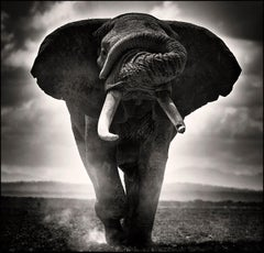 POWER I, Kenya, Elephant, b&w photography, Africa, Portrait