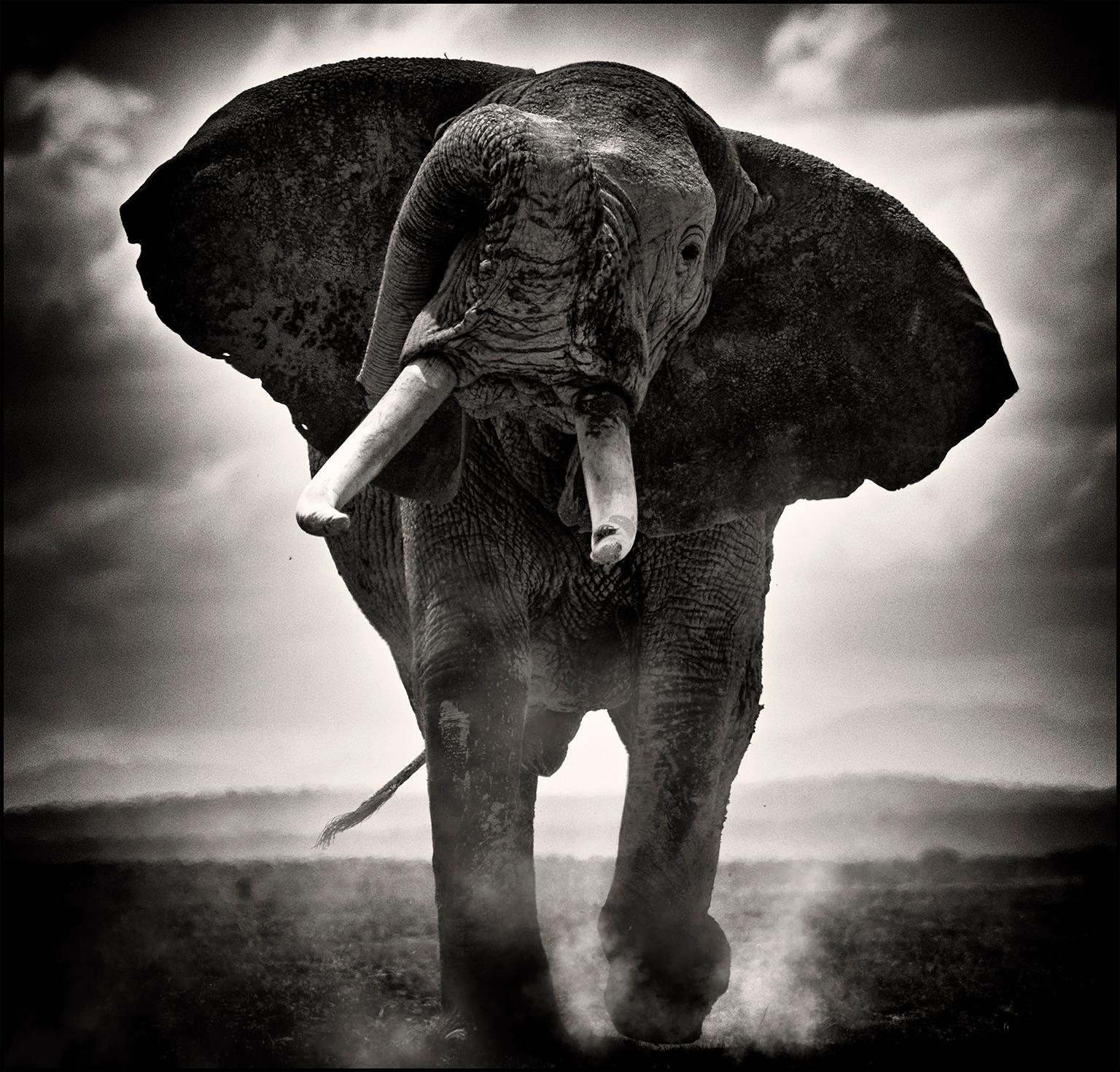 POWER II, Kenya, Elephant, b&w photography, Africa, Portrait